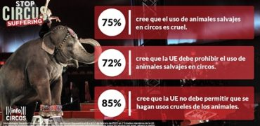 Pedimos a la Unión Europea la prohibición de los circos con animales salvajes. Pongamos fin al sufrimiento en los circos