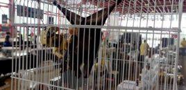 La Coalición para el Listado Positivo pide a la Ministra de Sanidad que se controlen las ferias y exposiciones de animales silvestres