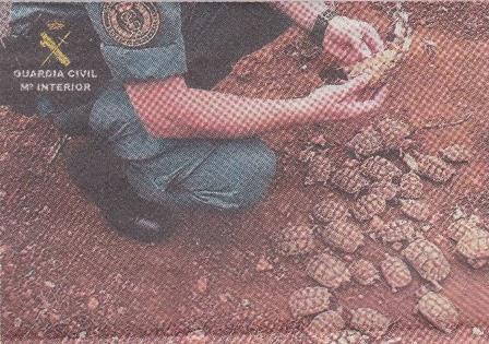 Desmantelada la granja de tortugas ilegal más grande de Europa.
