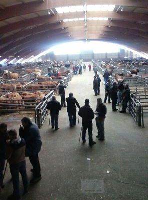 ANDA y Animals ` Angels aplauden la apuesta por el bienestar animal del Principado de Asturias y del Mercado de Ganado de Pola de Siero.