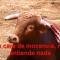 La Comunidad de Madrid subvencionará la celebración de novilladas