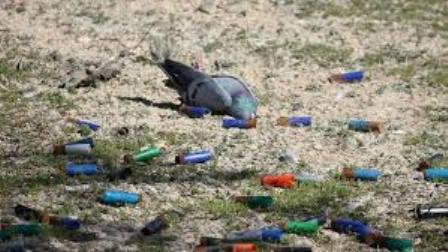 palomo asesinado
