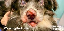 ANDA pide el control de la venta de animales por internet