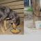 Perros atados permanentemente: una crueldad injustificable