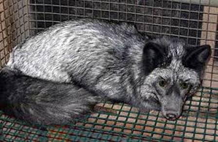 ¡MUY BUENA NOTICIA! Los Ángeles va a prohibir la venta de pieles de animales.