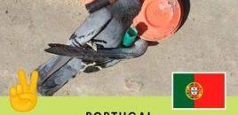 El Parlamento portugués prohíbe la caza deportiva de aves