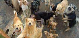 ANDA da la bienvenida al Proyecto de Real Decreto de Núcleos Zoológicos para animales de compañía