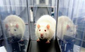¡HISTÓRICO! Colombia prohíbe  testar  en  animales para fines cosméticos