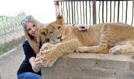 gran felino separado de su madre turismo irresponsable