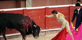 Más de 40 entidades de bienestar animal piden en Cantabria apartar a los menores de la tauromaquia
