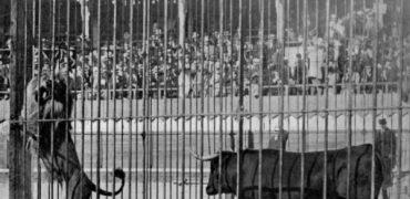 Tigres contra toros y elefantes o la España que se deleitaba con la sangre