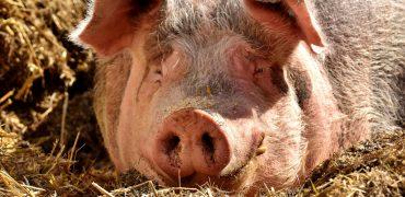 ANDA aplaude el histórico compromiso de la Comisión Europea para poner un fin al uso de las jaulas en la ganadería europea