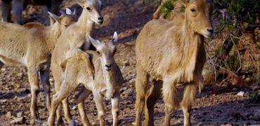 animales en españa en peligro de extinción