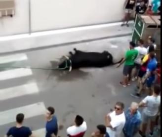 Muere un toro tras protagonizar el bou al carrer en Moncofa, (CASTELLÓN).