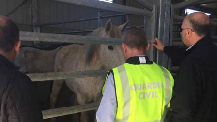 Detenidos 65 empresarios, veterinarios y funcionarios por la venta ilegal de carne de caballo en Europa
