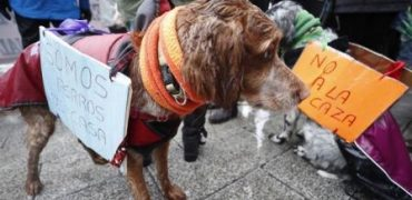 caza perros galgos manifestacion