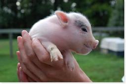 Ley de Sanidad Animal que relaciona de forma directa este aspecto con el bienestar animal