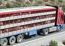 cerdo-camion