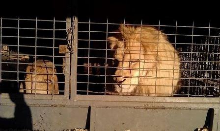 circo animales maltratados