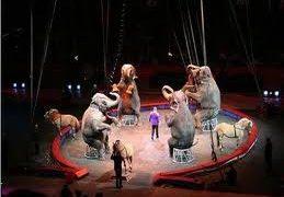 circos