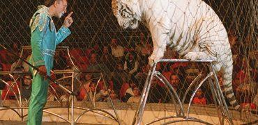 circos animales