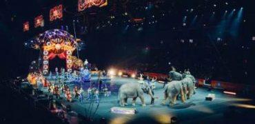 circo animales salvajes