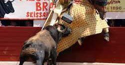 Los Caballos en las corridas de Toros. Las víctimas invisibles