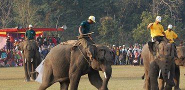 elefante turismo