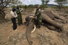 elefantes trofeos de caza