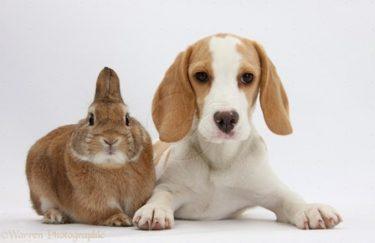 payasos enseñan cuidar mascota