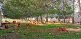 ANDA ha sido invitada a la inauguración de una nueva granja en Álava