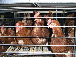 El Corte Inglés apuesta por el bienestar animal en un acuerdo pionero en España con la Asociación Nacional para la Defensa de los Animales.
