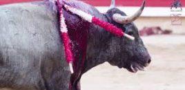 El Gobierno Autónomo de Murcia destina 44 mil euros para fomentar la tauromaquia