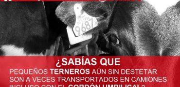 Varios ministros europeos piden una profunda reforma de la legislación sobre transporte de animales